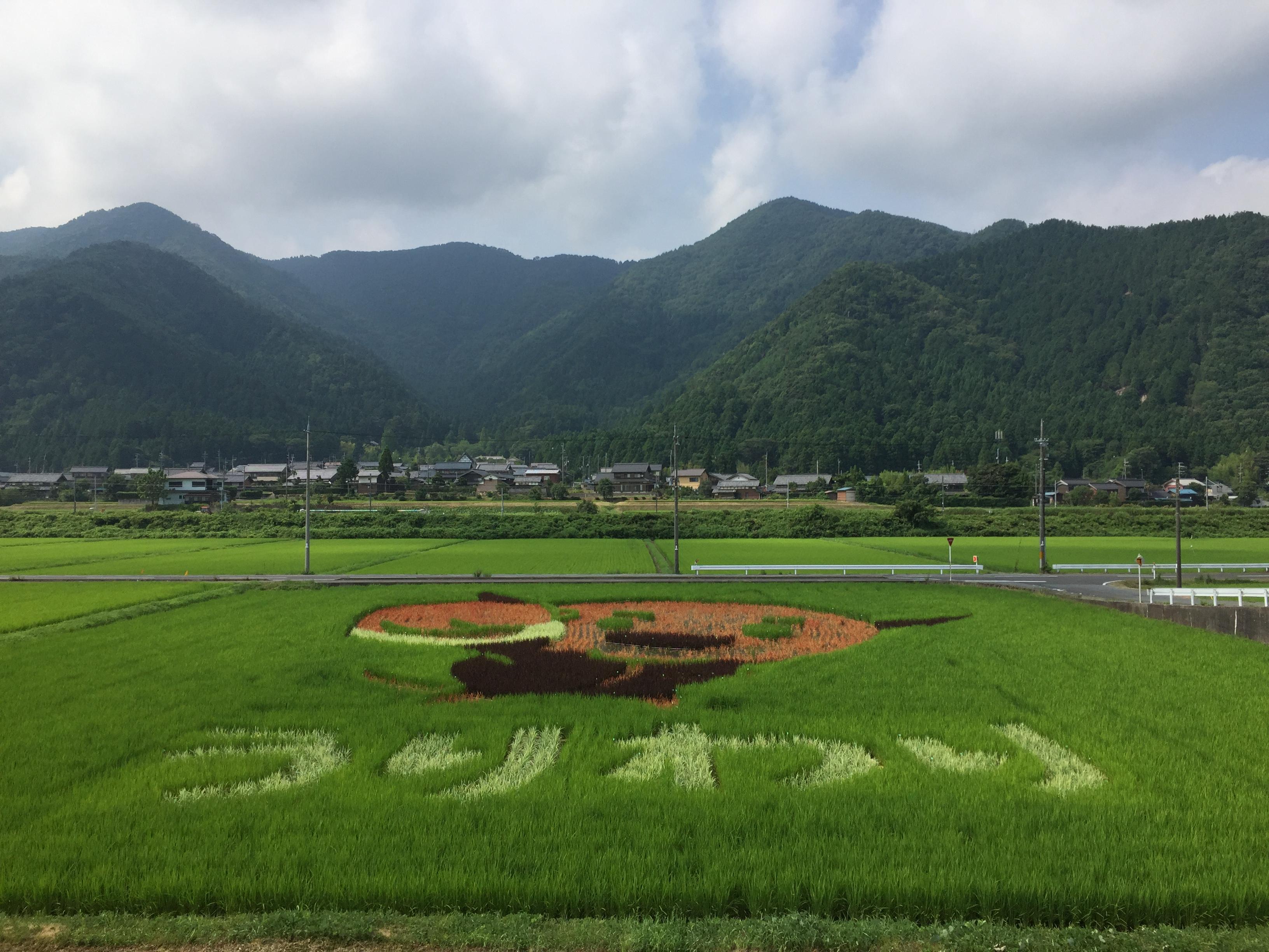 2018 名水うりわり農園の田んぼアート(若狭町)