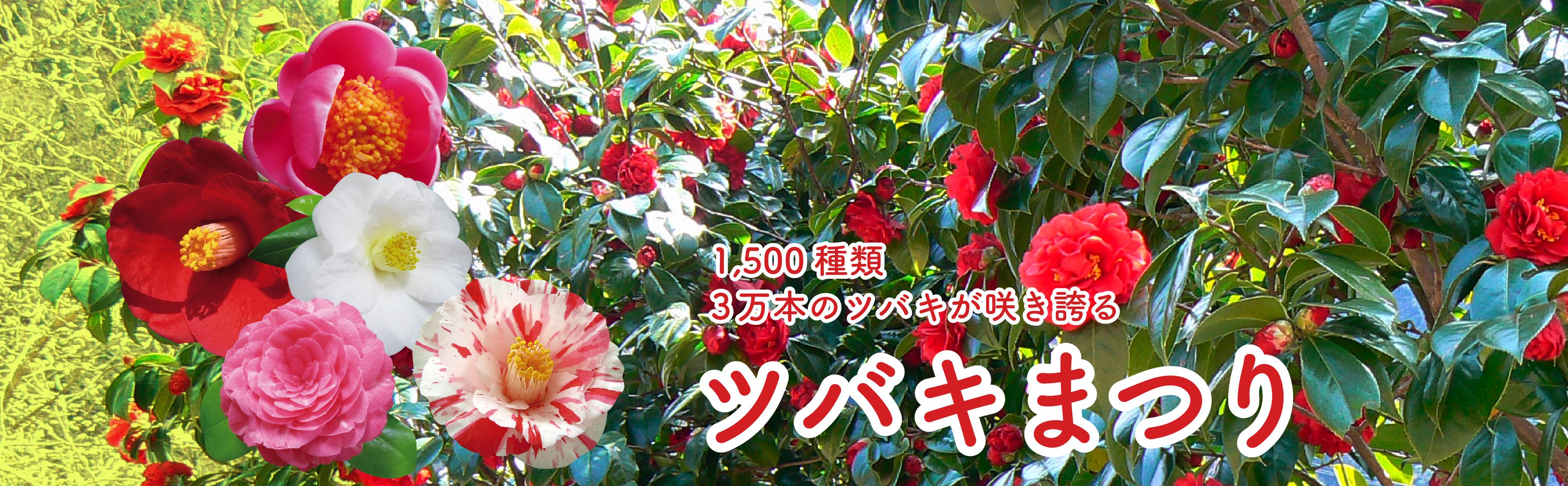 2019 ツバキまつり(京都府舞鶴市)