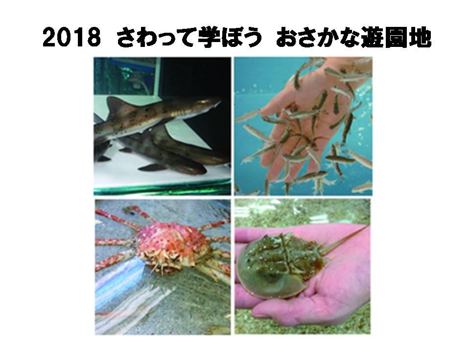 2018 さわって学ぼう おさかな遊園地(石川県)